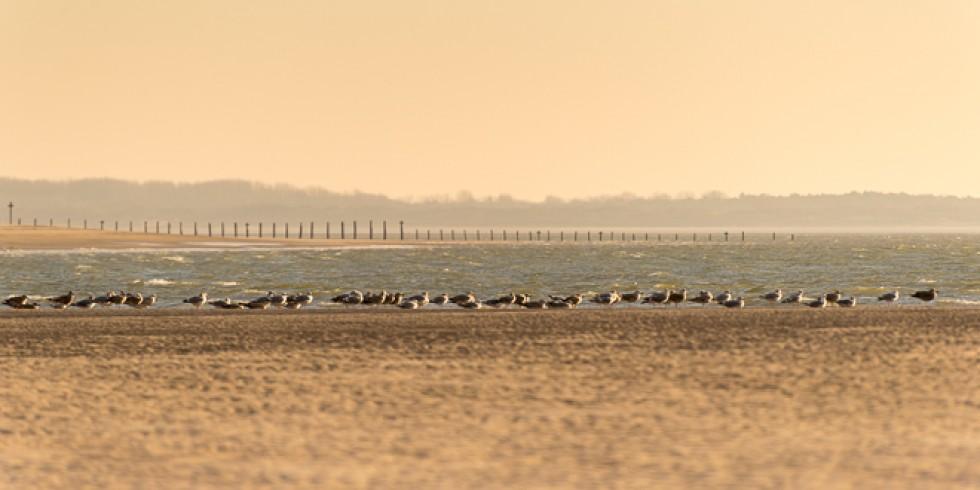 Report: Maasvlakte (2015-12-08)